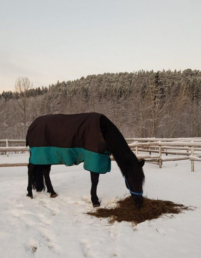 Hest foring SA