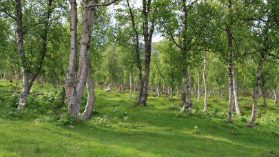 Godt skjøtta hagemark i Rennebu