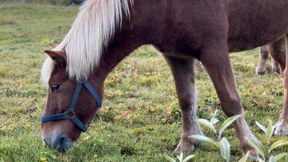 Hest3x