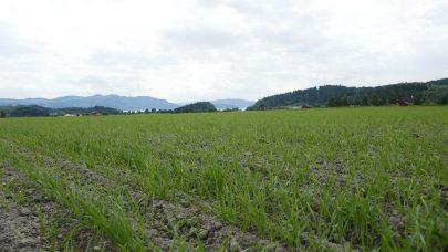 Klimakalkulator for kornproduksjon JOF